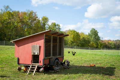 pasture-raised-chicken-wss-farms