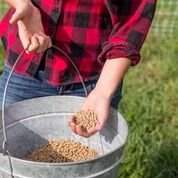 wss-farms pasture-raised chicken feed